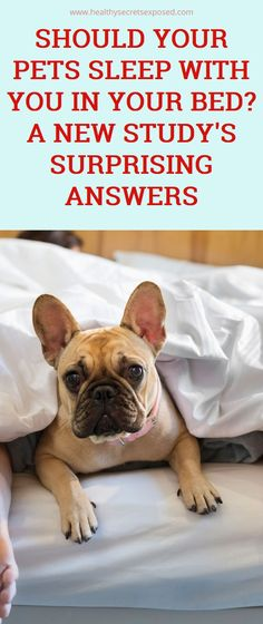 Should Your Pets Sleep With You in Your Bed? A New Study's Surprising Answers Natural Teething Remedies, Natural Cough Remedies, Natural Cures, Herbal Remedies, Health Remedies, Natural Health, Health Tips, Health And Wellness, Health Benefits