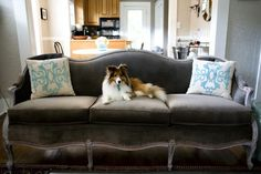 grey velvet vintage sofa