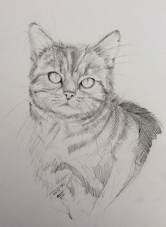 "Dessin original crayon graphite sur papier bristol "" Portrait de chat "" Black and white original pencil drawing"