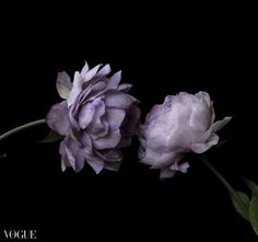 Love call Cold Porcelain Flowers, Vogue, Art, Art Background, Kunst, Art Education