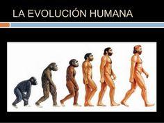 Hace 70 millones de años, entre los mamíferos se desarrollaron diferentes tipos de monos llamados primates. Los primeros primates fueron animales pequeños, de hábitos nocturnos, que vivían en los árboles. Con el tiempo, algunos de éstos fueron cambiando sus hábitos y características físicas. Del tronco común de los primates, surgieron dos ramas de monos: 1) las de los simios: chimpancé, gorila y orangután. 2) los homínidos o protohumanos, dando origen del hombre actual.