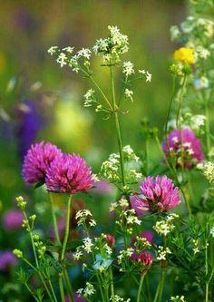 25 Beautiful Ideas for Wildflower Fields - Floral Garden Ideas Spring Flowers, Wild Flowers, Field Of Flowers, Meadow Garden, Pretty Flowers, Belle Photo, Flower Power, Planting Flowers, Bloom