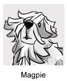 """Magpie is Booker's dog. Her bread is Komondor from Hungary--and she's ALWAYS hungry! Booker and Dahlya like to call her the """"dreadlock dog."""""""