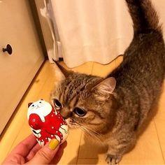 おはよーなっきぃ Part85 るなっきぃ❤️ ルナちゃんの写真ありがとう😍 今日のラストナルチカ@京都 楽しんでね👍 #c_ute #中島早貴 #なっきぃ #おはなっきぃ  #るなっきぃ  #ハロメン猫 #愛猫 ルナ #luna #今日も1日頑張りましょう  #今日もc_uteちゃんが幸せでありますように #goodmorning  #haveaniceday  #nacky #sakinakajima