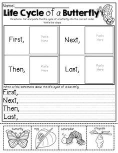 Grade 2 Science, Kindergarten Science, Elementary Science, Science Classroom, Science Lessons, Kindergarten Worksheets, Teaching Science, Life Science, Grade 1 Worksheets