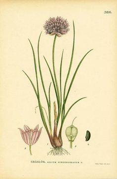 Botanical Flower print
