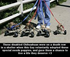 Special needs Pets need special love. <3