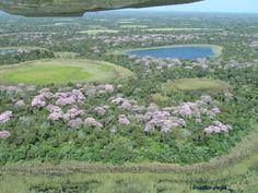 Planície pantaneira em 82% da sua vegetação nativa preservada, de acordo com estudo da WWF (Foto: Claudia Gaigher/TV Morena)
