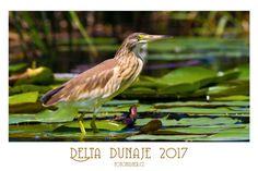 Připravili jsme pro vásautorský fotokalendář pro rok 2017. V kalendáři najdete fotografie ptactva z Delty Dunaje. Cena kalendáře…