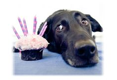 Can you light the candles already? Dog Pictures, Animal Pictures, Mans Best Friend, Best Friends, Animal Party, Party Animals, Celebration Cakes, Cute Dogs, Laughter