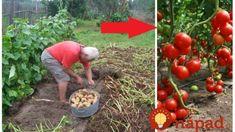 7 neoceniteľných rád našich predkov, ktoré by si mal každý záhradkár zapísať za uši: Kto ich pozná, ten sa nebojí o svoju úrodu! Gardening, Fruit, Vegetables, Recipes, Foods, Food Food, The Fruit, Lawn And Garden, Vegetable Recipes