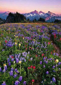 Flowers plus mountains