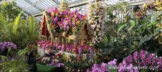 Kew Orchid Festival 2018 British Orchid Orchid Floral art at Rice growing at Vanda Royal Thai Embassy in Kew More orchid photos at Much more to see at Rebecca Louise Law: Life in Death… Kew Gardens, Botanical Gardens, Orchid Show, Phalaenopsis Orchid, Winter Flowers, Colorful Garden, Winter Garden, Growing Plants, Winter Time