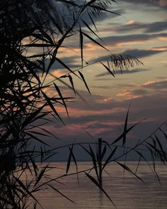Karl Seitinger, Reedgrass at Sunset on ArtStack Celestial, Sunset, Artwork, Artist, Photography, Painting, Outdoor, Bregenz, Outdoors