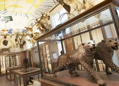 """Museum of Hunting and Nature For a more bestial take on """"nature morte,"""" track down the Musée de la Chasse et de la Nature (Museum of Hunting and Nature) in the Rue des Archives. This sumptuous 18th-century setting hosts a taxidermal menagerie as well as objets d'art, trophies and weapons."""