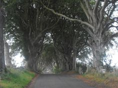El camino del rey de Juego de Tronos, The Dark Hedges | The Dark Hedges - Kingsroad in Game Of Thrones