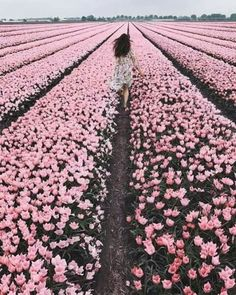 infinite flower field