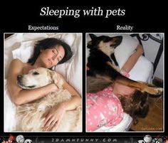 expectation reality - Google Search