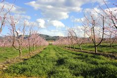 Les senies ( Benissanet ) Vineyard, Paradise, Outdoor, Outdoors, Vine Yard, Vineyard Vines, Outdoor Games, The Great Outdoors, Heaven