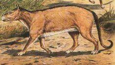 Resultado de imagen para Didolodontidae
