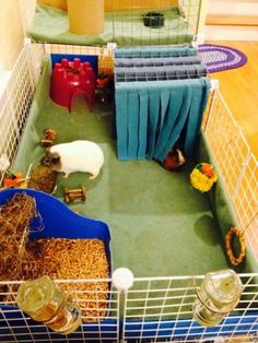 """guinea pig cage, I like the """"curtains"""" in front of the bedroom"""