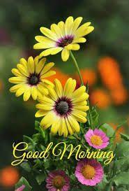 good morning encouragement / good morning encouragement _ good morning encouragement quotes _ good morning encouragement faith _ good morning encouragement for him