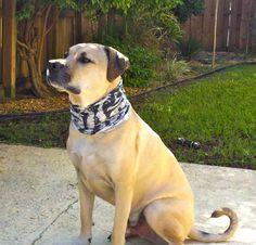 Dogs deserve Buff Headwear too :)
