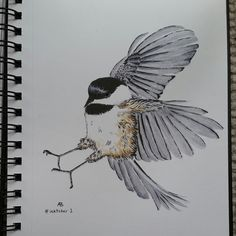 An ink drawing of a