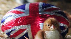 Brexit Chocolate | El impuesto sobre los huevos de pascua y otras mentiras que cuentan ...