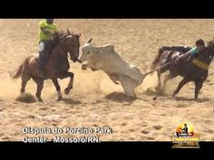 Urge Brazilian Officials to Uphold Ban on Cruel Rodeos! | Action Alerts | Actions | PETA