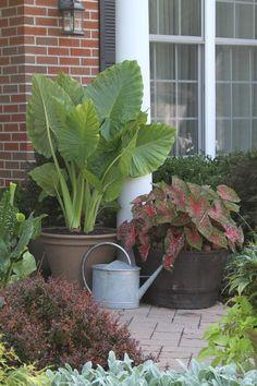 Conceptos sobre plantas venenosas plantas venenosas for Concepto de plantas ornamentales