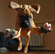 puppy pounce!
