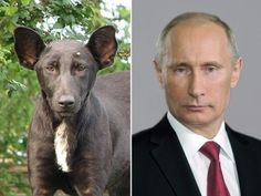 This dog is clearly Vladimir Putin's patronus.   19 Things You'll Never See The Same Way Again