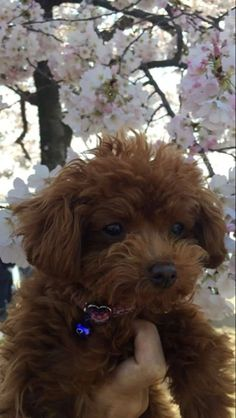 Katy Perry's dog Nugget is the cutest thing!