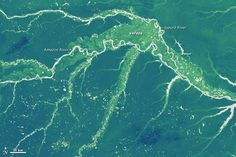 Global Forest Heights: Take Two :   earthobservatory.nasa.gov  A high-resolution map offers a global view of forest canopy heights.