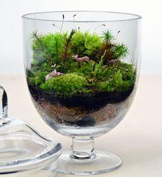 Moss garden with little animals