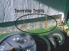 How to Inexpensively Get Rid Of Termites Yourself http://www.arrowservices.com/