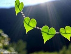 heart leaves, even in nature!