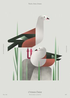 Orinoco Goose (dsc) Art Print by Aga Więckowska | Society6