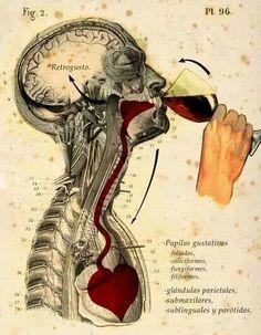 Anatomía de un buen trago de vino.