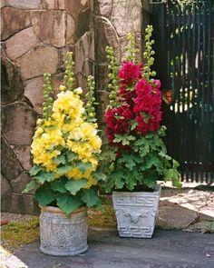 How to Make a Container Butterfly Garden Who do not love butterflies and making a butterfly container garden is a great way to invite beautiful butterflies fluttering across your urban garden. Container Flowers, Flower Planters, Container Plants, Container Gardening, Flower Pots, Succulent Containers, Fall Planters, Container Design, Flower Ideas