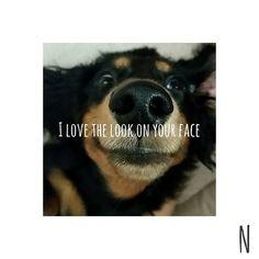 . ドあっぷface🐶♥ 中々投稿できなくてやっと💡 #miniaturedachshund #minidachshund #dog#dogstagram #minidoxie #sausagedog #dachshund #instadog #doglover #cutedog #nodognolife #dachshundlove #sausagedogsofstagram #puppy#baby#honey #love#mybaby #ミニチュアダックスフント #ミニチュアダックスフンド #ダックスフンド#ブラックタン #短足#胴長#犬#雄#男の子#愛犬