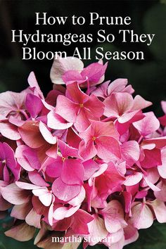 Learn how to correctly prune hydrangeas and how to take care of this beautiful spring flower, so it grows all season long. Gardening How to Prune Hydrangeas So They Bloom All Season Hydrangea Potted, Hydrangea Bloom, Hydrangea Landscaping, Hydrangea Care, Hydrangea Flower, Hydrangea Season, Hydrangea Varieties, Climbing Hydrangea, Garden Yard Ideas