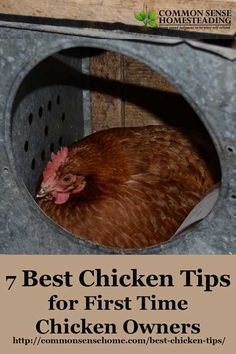 Get your flock started with the best chicken tips - How to buy chickens, must have items for your coop and run, chicken feeding and watering. Chickens in the backyard Cheap Chicken Coops, Chicken Barn, Portable Chicken Coop, Chicken Life, Best Chicken Coop, Backyard Chicken Coops, Chicken Coop Plans, Building A Chicken Coop, Chickens Backyard
