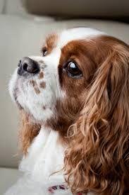 Resultado de imagen para perritos tiernos razas