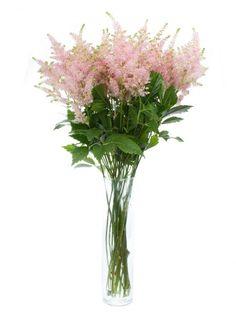 Rosa Astilben, auch Prachtspiralen genannt - jetzt mehr entdecken auf Blumigo.de. Saison im April, Mai, Juni, Juli, August und September. #blumen #schnittblumen #hochzeit #blumendeko #hochzeitsdeko #floristik #weddingflowers #hochzeitsblumen