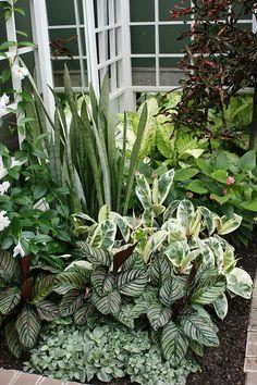 Small Tropical Gardens, Tropical Garden Design, Tropical Plants, Ficus, Outdoor Plants, Outdoor Gardens, Tropical Backyard Landscaping, Balinese Garden, Bali Garden