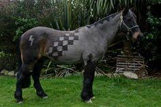 #horsehaircut