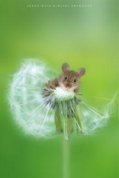 ~ Little Heartbreaker ~ by Jasna Matz - Photo 141009919 - 500px
