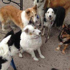 #TDL #TheDogLiberator #walkadog #adopted #FloridaRescue #HappyEnding #love #donate #blackandwhite #smartdog #Reunion #March252017 #dogpark